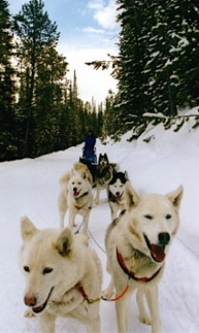 Breckenridge Dog Sledding Tours