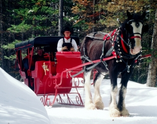 Exclusive Breckenridge Sleigh Rides