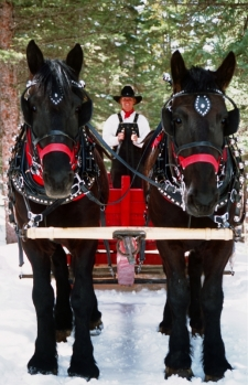 Sleigh Rides in Breckenridge, Colorado