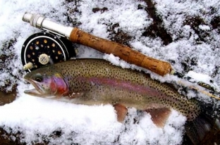 Breckenridge fly fishing full day trips for Breckenridge co fishing
